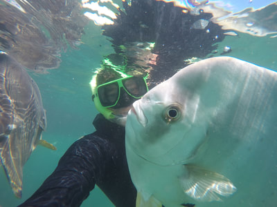 Snorkelling with Batfish on a Discovery Tour with Aquascene Magnetic Island